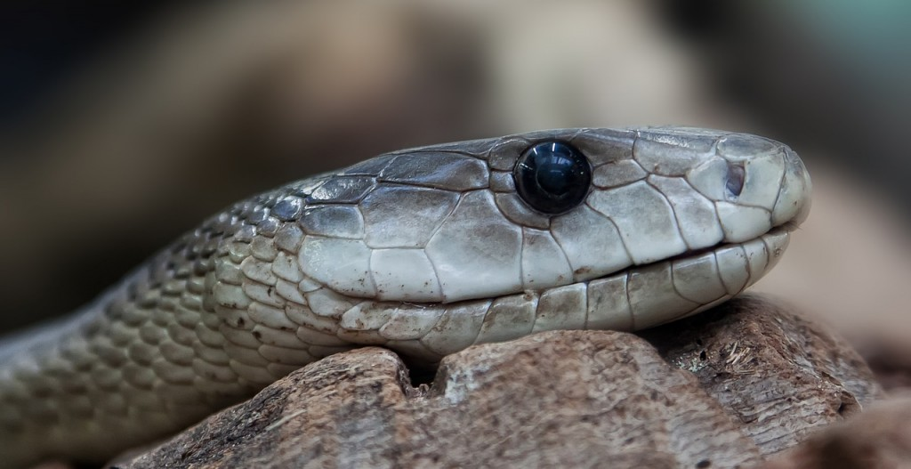 snake-653644_1280