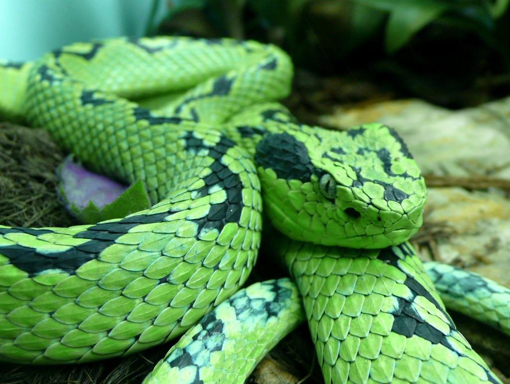 snake-590612_1280