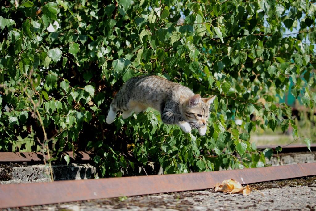 cat-913059_1920
