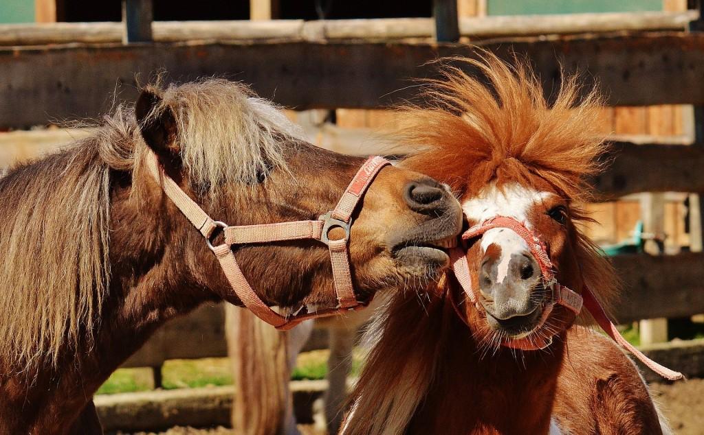 horses-1348376_1920