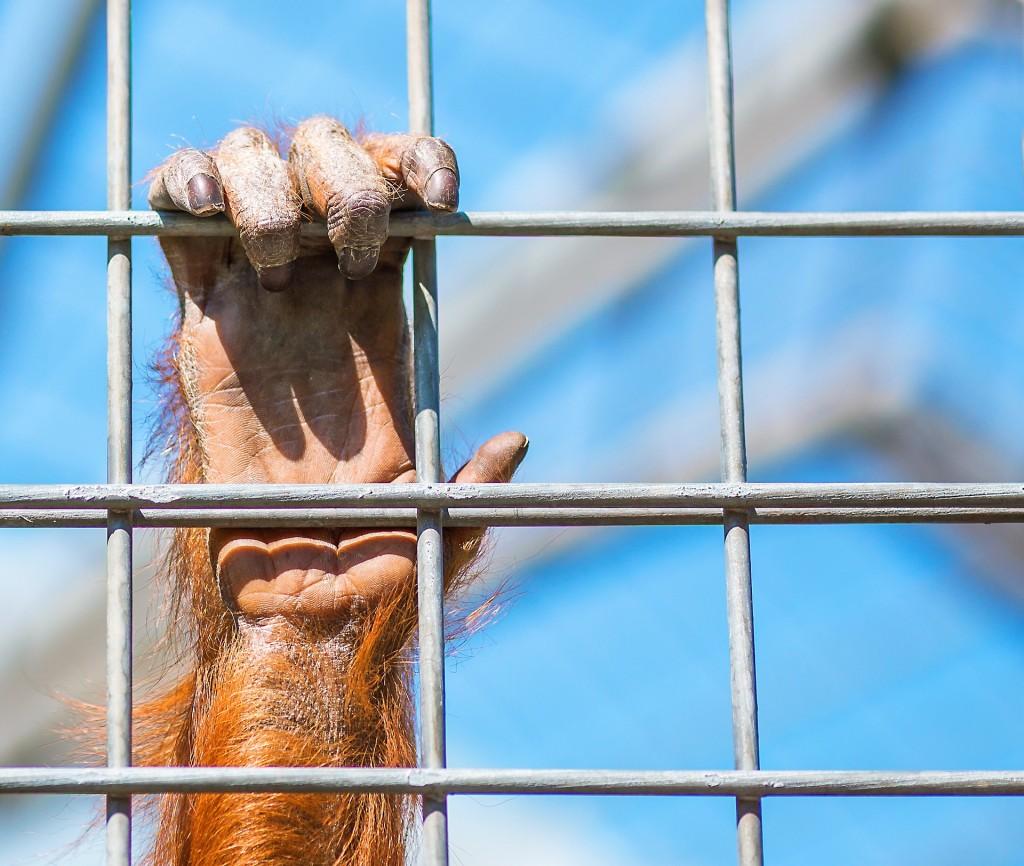 monkey-1187335_1920